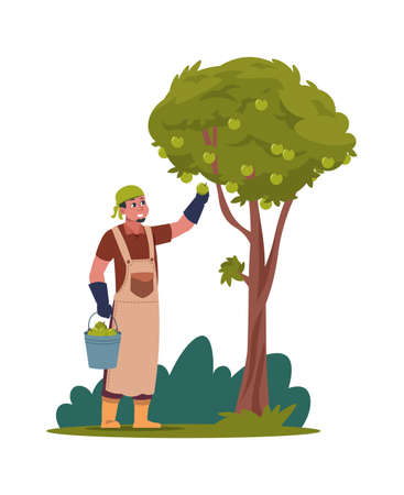 Harvesting man in garden. Gardener picking fruit from tree. Male holding bucket full of ripe apples. Agricultural worker grows and takes care of plants. Vector farmer working in yard Stock Illustratie