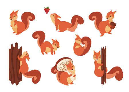 Cartoon squirrel. Cute wild animal with acorn. Playful fluffy creature holding mushroom and climbing on tree trunk. Vector orange forest rodents set with furry tail jumping on branches