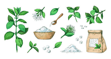 Hand drawn stevia. Healthy sugar alternative plant. Natural leaves extract. Sweet pills and dried stems. Diet product engraving collection. Stalks with flowers. Vector sweeteners set Ilustracja