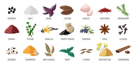 Spice set. Cartoon food seasoning. Cooking ingredients for recipe. Garlic and basil leaves. Natural cloves or cumin. Spicy peppercorn. Vector organic fresh or dry powder condiments Ilustracja