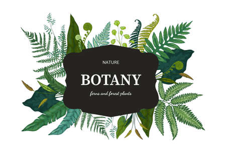 Botanical background. Hand drawn wallpaper with forest foliage. Green fern sprouts and bourgeon. Frame with lettering and decorative wild plant leaves. Vector floral design template