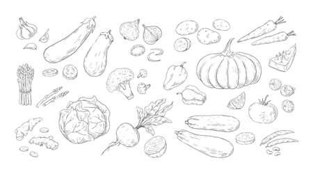 Hand drawn vegetables. Vintage sketch of organic farm products. Tomato and broccoli harvest. Isolated mushrooms or onion. Cabbage, corn and potato pencil drawing. Vector vegetarian food set Ilustracja