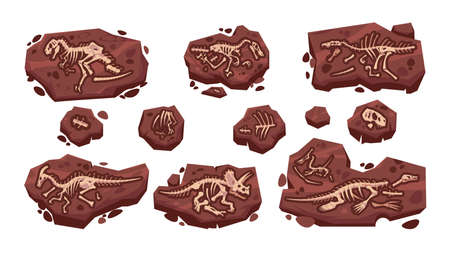 Dinosaur fossil. Cartoon paleontology excavation with prehistoric Jurassic dino skeletons set. Isolated predator lizard bones in ground. Vector archeology collection of extinct reptiles Illustration