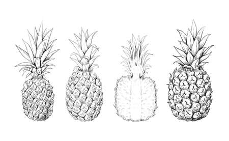 Pineapple sketch. Hand drawn set of tropical sweet fruits. Exotic dessert. Isolated plant engraving. Whole or half ananas. Organic vitamin food. Vector vegetarian products collection