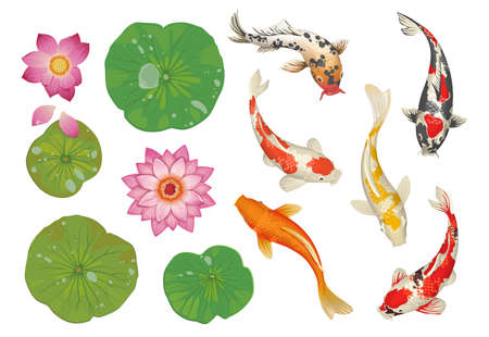 Koi fish in pond. Cartoon traditional oriental scene with golden carp, lotus leaves and flowers. Japanese water pool decoration natural elements set. Vector botanical Asian background Illustration