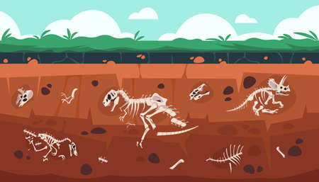Underground fossil. Cartoon Earth ground layers with dinosaur skeleton and skull. Extinct reptile bones science exploration. Vector geology and paleontology excavation illustration Illustration