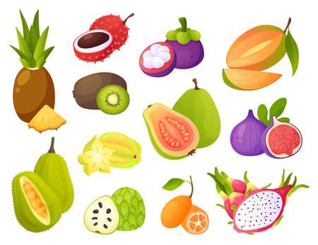 Exotic fruits. Juicy pineapple and mango, tropical guava and tasty fig, mangosteen and carambola, cartoon jackfruit and organic cherimoya, raw papaya fresh vitamin natural food. Vector set