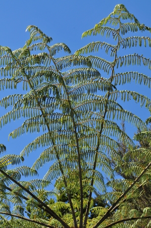 Fern branches against blue sky Stock Photo