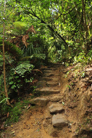 Stone stairway on footpath in bush photo