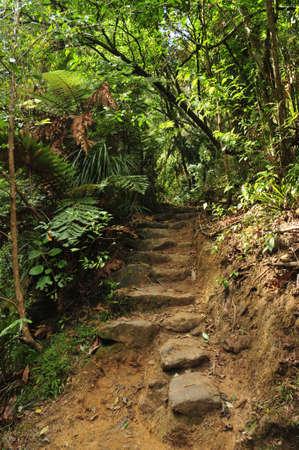 Stone stairway on footpath in bush
