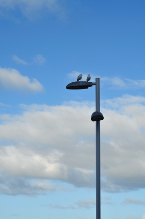 Street pole light with two seagulls on top with cloudy sky in background