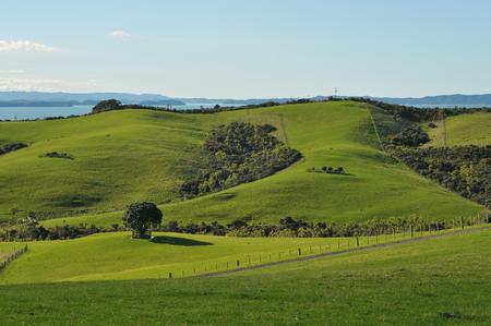 Green sunny regional park in New Zealand photo