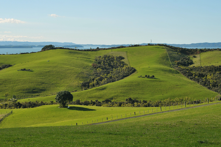 Green sunny regional park in New Zealand