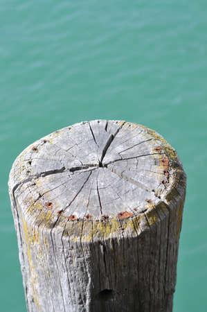 Cracked and dried wharf pole.