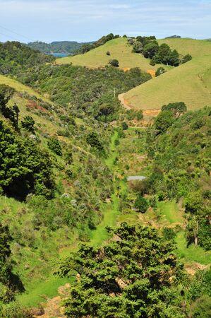 topography: topograf�a accidentada del campo alrededor de Matapouri en Nueva Zelanda. Foto de archivo