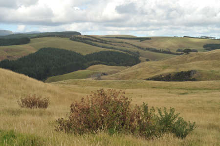 Endless pastures of the countryside around Dargaville in New Zealand.