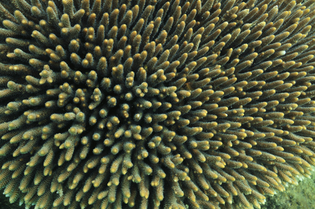 hard coral: A close-up picture of brown-green hard coral. Stock Photo