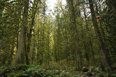 Dense forests of north Vancouver in early spring. Stock Photo
