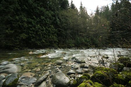 temperate: Forest around Lynn Creek in north Vancouver.