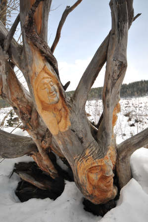 bark carving: Wood carving on tree in High Tatras.