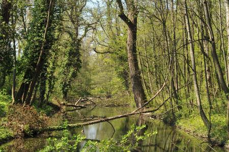 vegetation: Rusovce dense vegetation around artificial water channel.