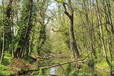 Rusovce dense vegetation around artificial water channel.