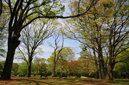 Fresh colours of Tokyo Yoyogi park in spring. Stock Photo