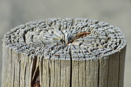 fence post: Detail of the top of a wooden fence post.