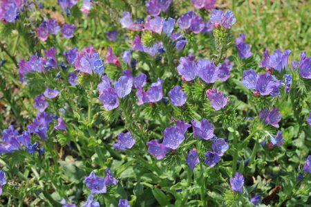 prickly flowers: Prickly purple flowers.