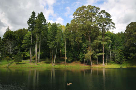 Landscape of Trees Behind a Lake