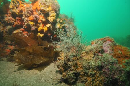 sediment: Hydroids growing on rock among colourful sponges and ascidians.