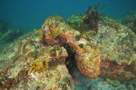crevice: Mostly barren underwater rock with small crevice underneath. Stock Photo