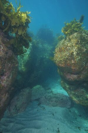 rock bottom: Flat bottom covered with white sand between two rock walls creating narrow underwater canyon.