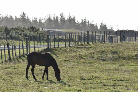 harsh light: Horse grazing dry grass in harsh summer light. Stock Photo