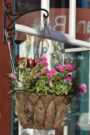 shop window: Flowers growing from pot hanging at shop window.