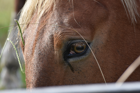 face close up: Horse face close up with focus on eye. Stock Photo