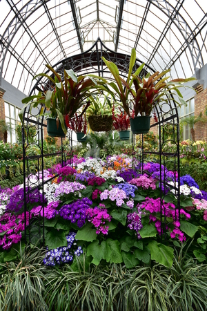 Inside large vintage greenhouse with warm weather loving flowers. Stock Photo