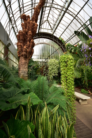 Inside large vintage greenhouse with tropical plants and trees.