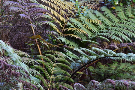 Branches of New Zealand giant fern in various colors.