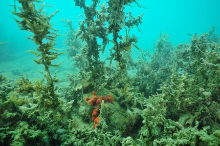 silty: Dense jungle of seaweeds covered with layer of fine mud  in Mahurangi Harbour. Stock Photo