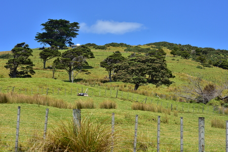 deforested: Typical farmland pastures divided by wire fences on flat hills in New Zealand countryside.