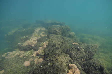 Tidal rocky platform covered with barnacles and short sea weeds in murky water. Stock Photo