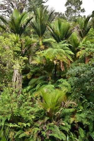Dense fresh New Zealand bush with palm trees and giant ferns.