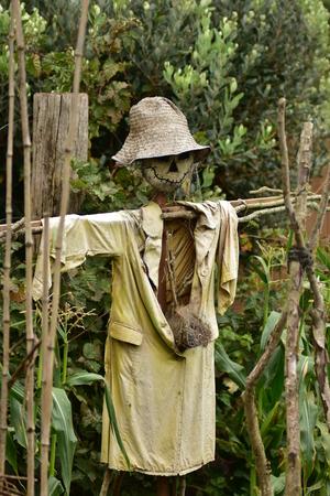 espantapajaros: A home-made scarecrow standing in his dense garden.