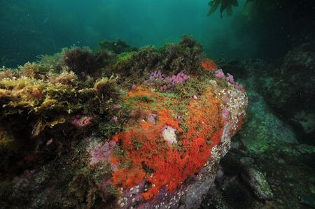 Rock covered with red encrusting sponges and purple compound tunicates in shade of overhang.