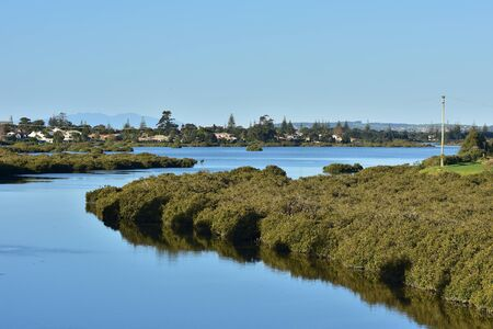 Calm waters with growth of mangroves in estuary in Orewa.