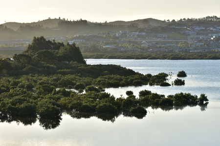 Calm waters with growth of mangroves in backlight with suburbs in background. Stock Photo