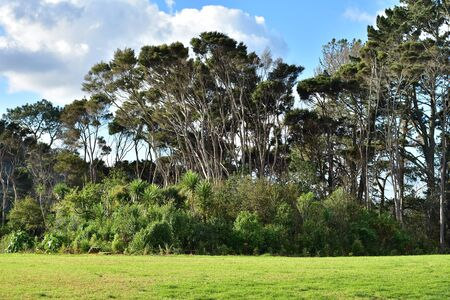 Typical view of  park areas of New Zealand North Island with dense bushes and cabbage trees coverage and tall both native and introduced trees above.