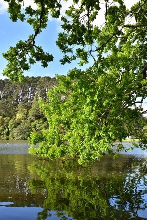 Tree branches with fresh green leaves hanging above water and being reflected on calm surface. Stock Photo