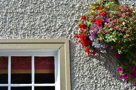 Colorful flowers hanging on white exterior wall net to wooden frame of multi-pane window in countryside in Ireland. 版權商用圖片